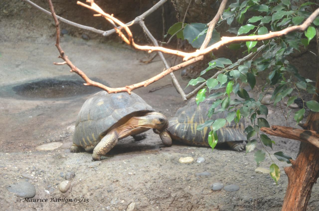 Zoo de Bâle Suisse