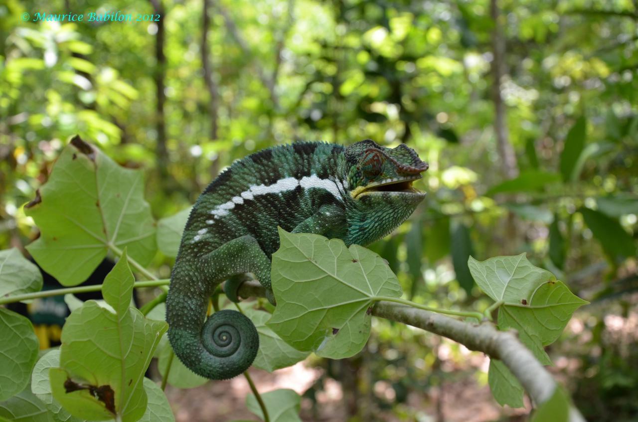 Réserve de Lokobe , Île de Nosy Be Nord de Madagascar