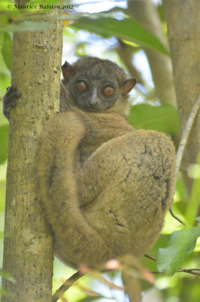 Île de Nosy Be , Nord de Madagascar , région du parc de Lokobe