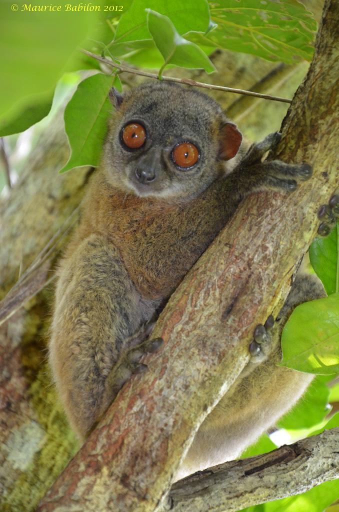 Île de Nosy Be , Nord de Madagascar