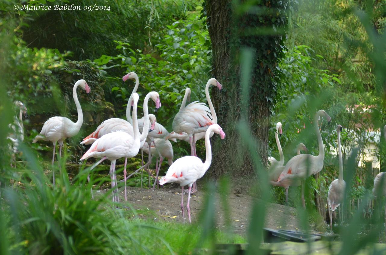 Visite du Zoo d' Amnéville été 2014