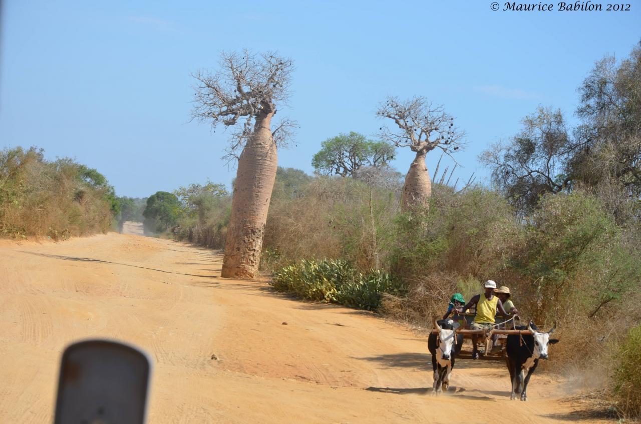 Réserve de Reniala dans le Sud Est de Madagascar