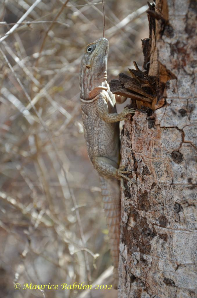 Région d'Ifaty , forêt de baobabs