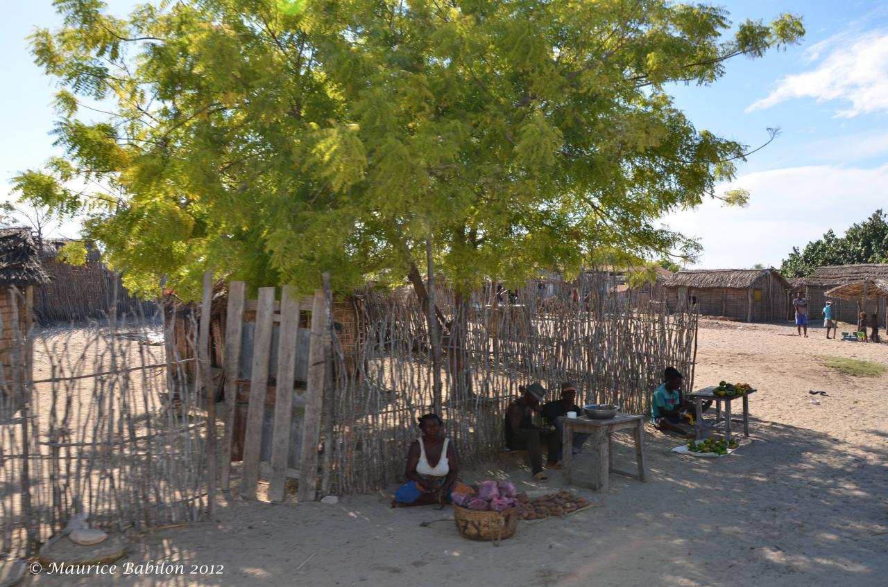 Région extrêmement aride de Sakaraha dans le Sud Ouest de Madagascar