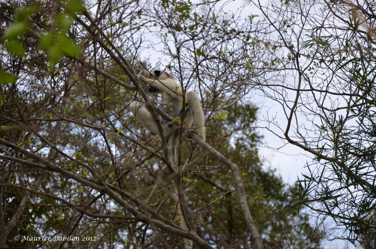 Sudde Madagascar , parc de Zombitse Vohibasia