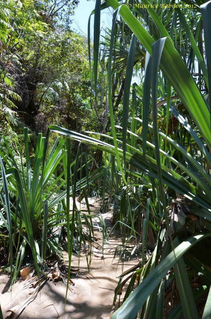 Sortie trekking dans le parc de l'Isalo