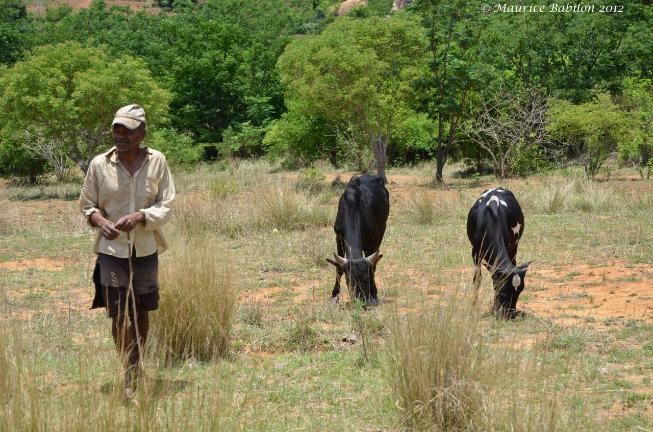 Traversée du plateau de Horombe