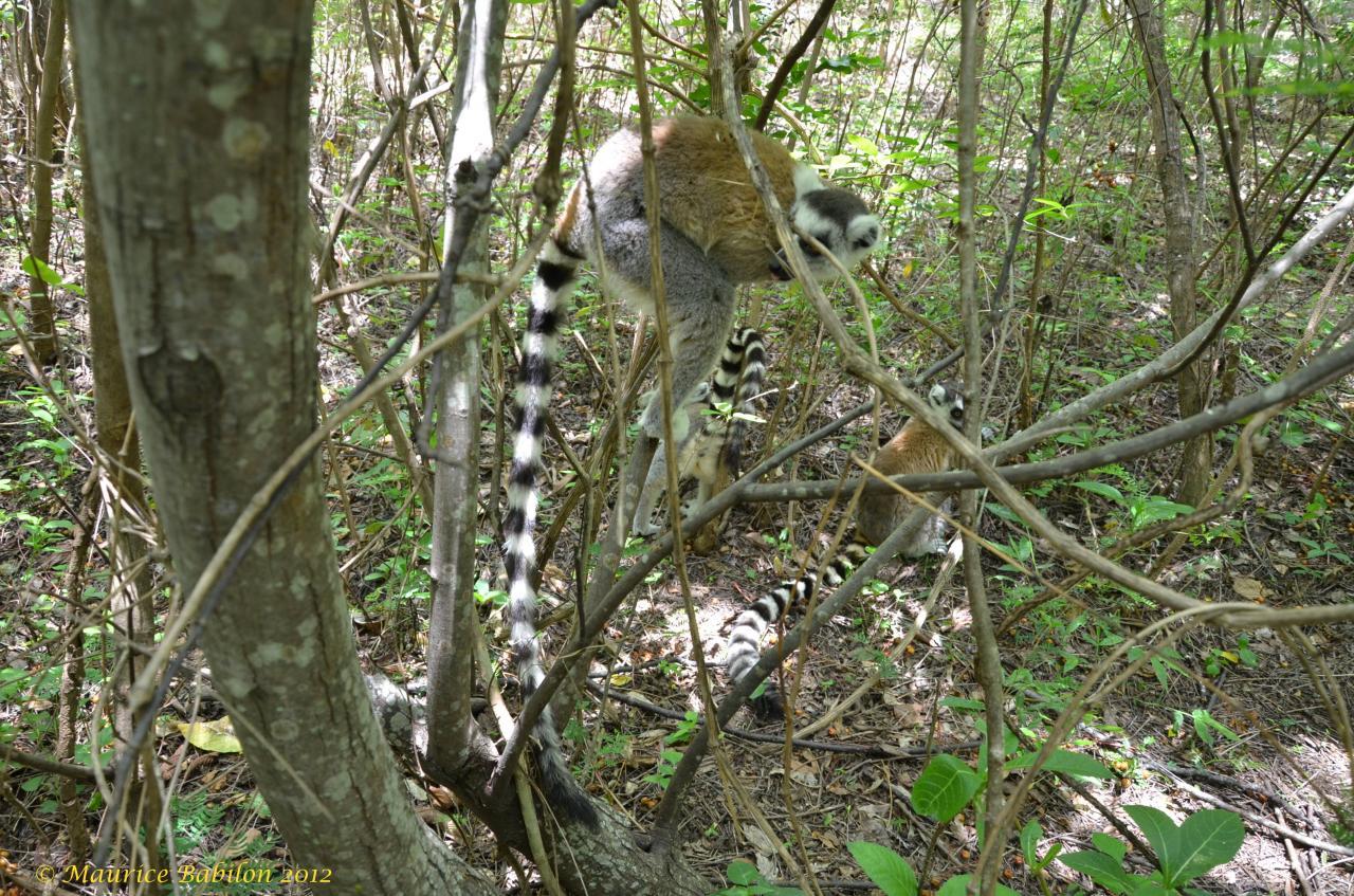 Sud-Est de Madagascar , région del'Isalo