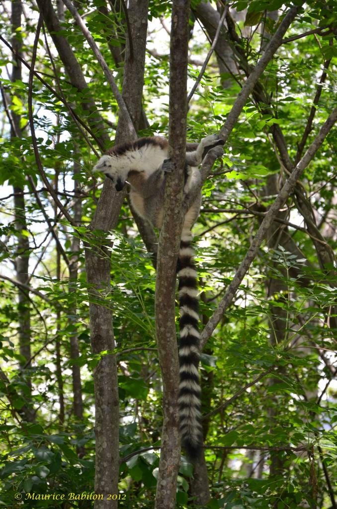 Région de Romanafana et Ifanadiana . Sud de Madagascar