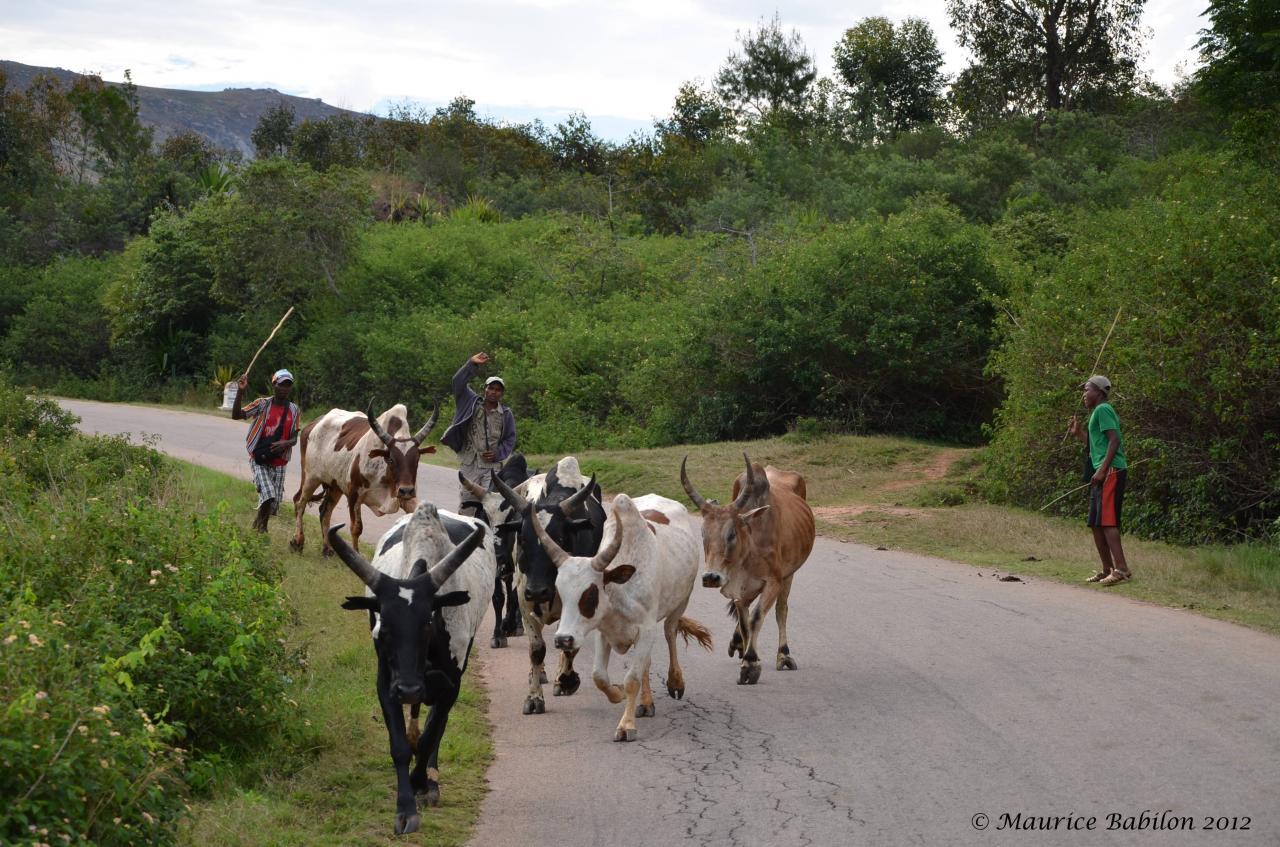 Une des rares routes goudronnées de l'île , direction Fianrantsoa