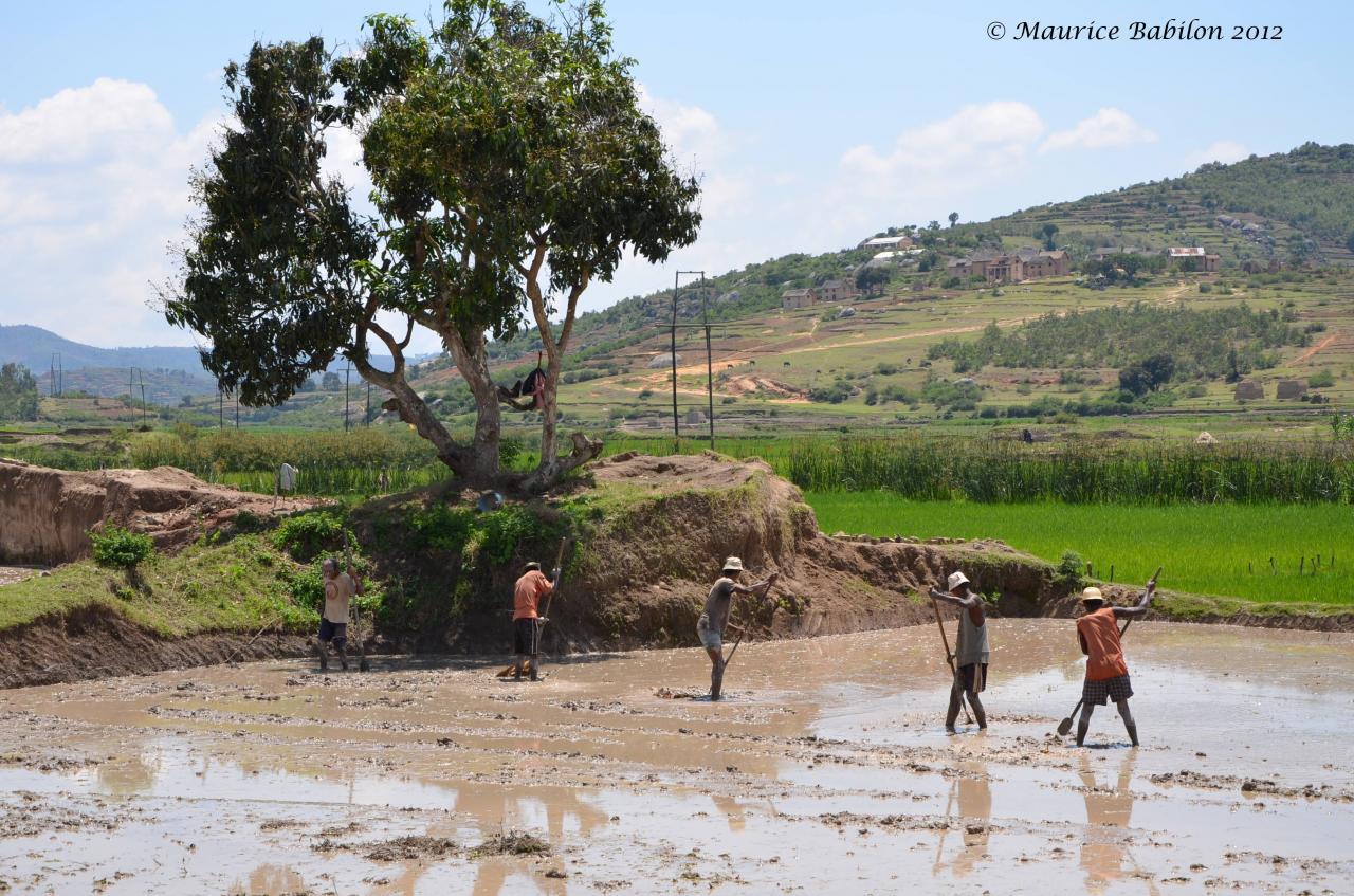 Region de Manakara
