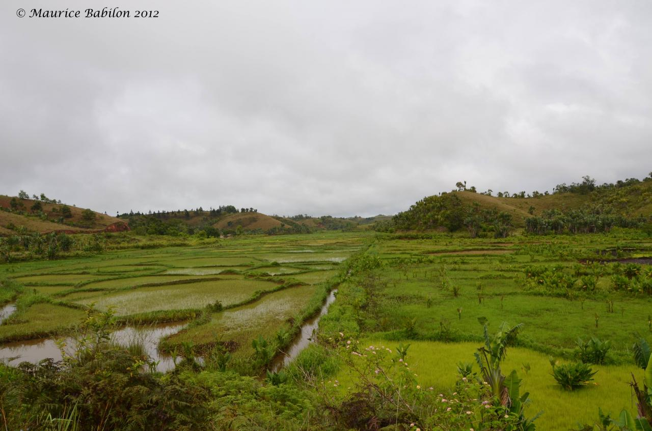 Région de Ambositra