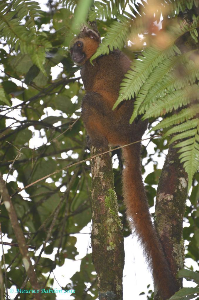 Sud-Est de Madagascar , région de Ranomafana