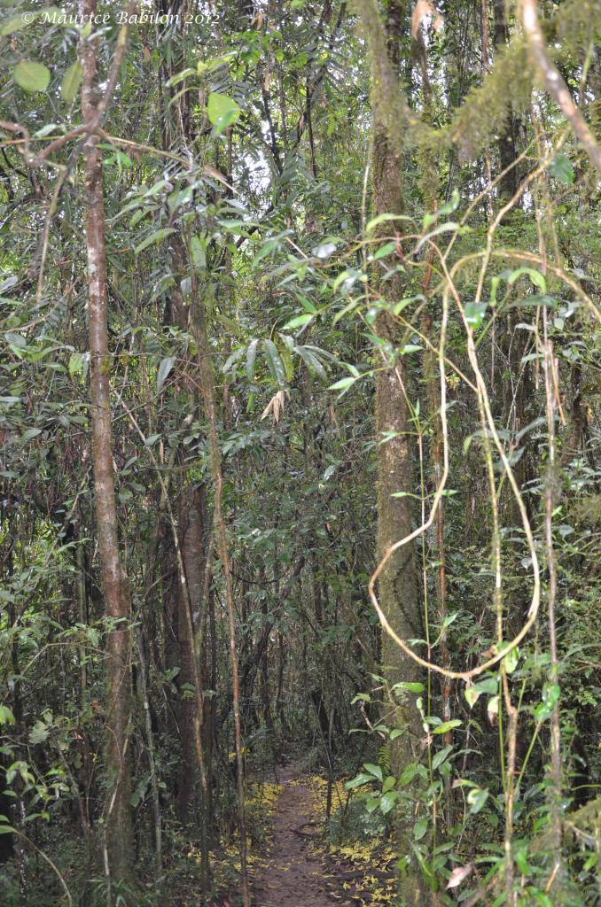 Parc de Ranomafana et sa forêt primaire