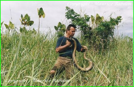 Capture Anaconda