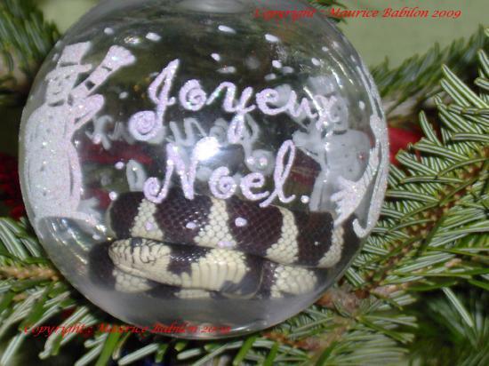 Carte de Noël 2005