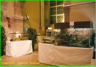 Exposition de Huningue 14-15 Mai 1988
